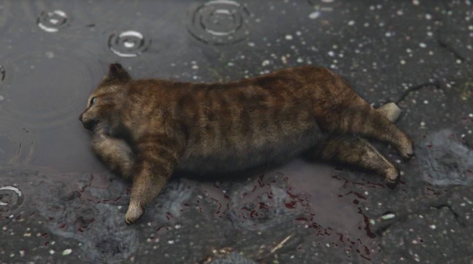 rigor mortis in cats how long does it last
